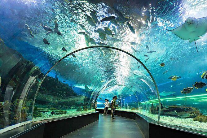 Que ver, hacer y visitar en Parque oceánico